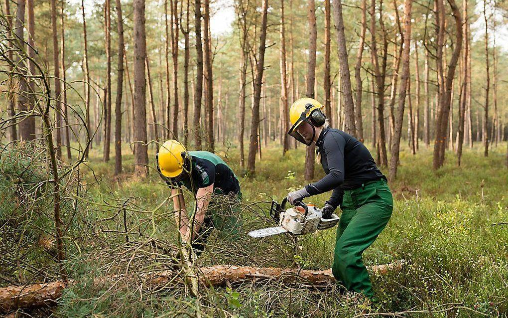 """""""Ook in Nederland legt bos het af tegen economische belangen en de mythe van terug naar toen. Landgoederen moeten worden omgetoverd naar """"zoals het vroeger was"""". Dus zagen maar."""" beeld André Dorst"""