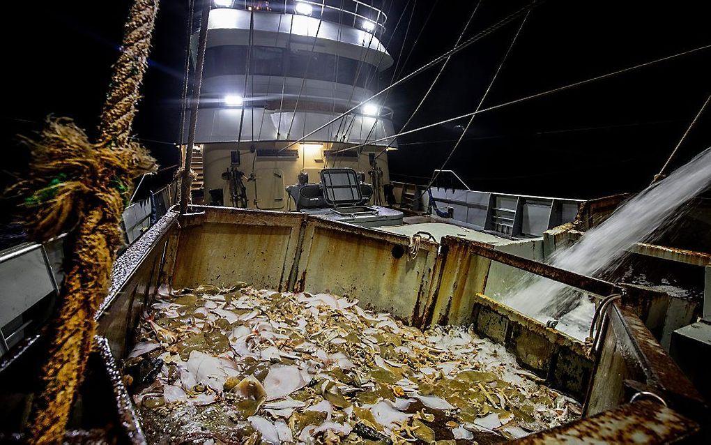 Texelse pulsvissers aan het werk. beeld ANP, Niels Wenstedt