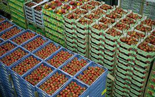 Kisten vol tomaten bij The Greenery in Bleiswijk. beeld ANP, Koen Suyk
