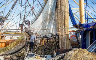 Urker pulskotter UK 33 in de haven van Den Helder. beeld ANP, Niels Wenstedt
