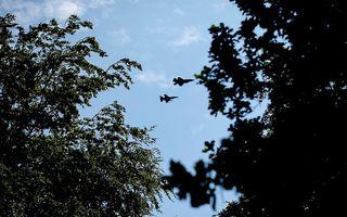 De JSF samen met een F16 boven Paleis Het Loo. Beeld ANP