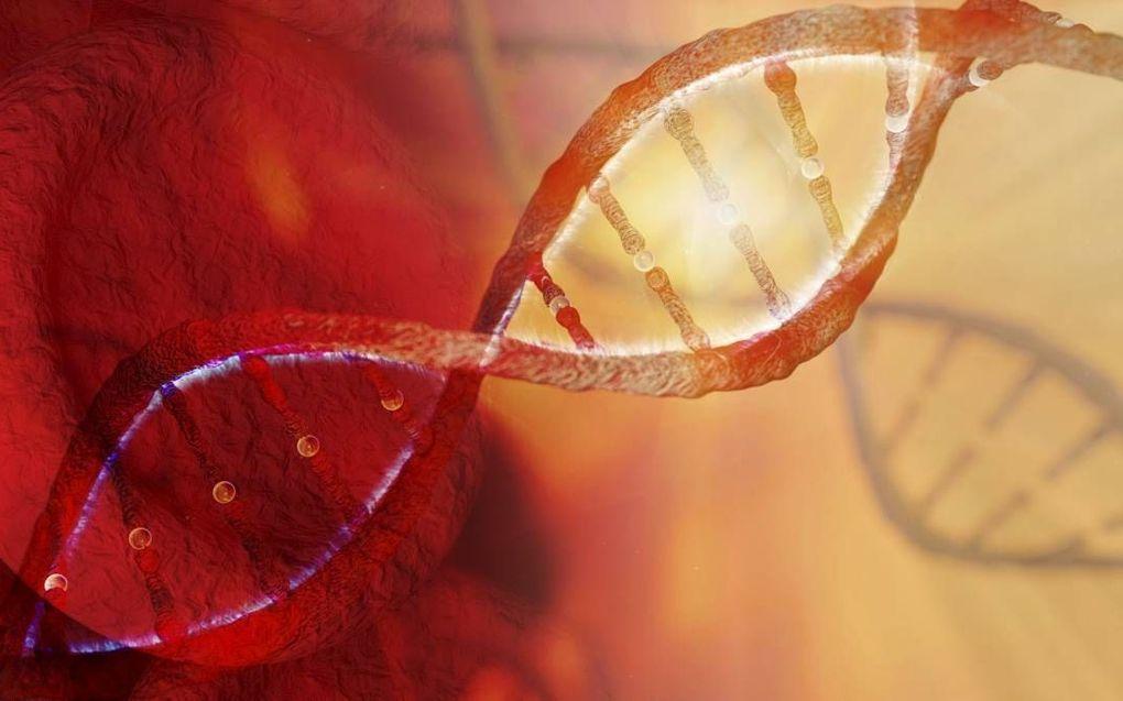 """""""In een uitgebreide genetische studie ontdekten genetici dat negen van de tien diersoorten op de planeet op hetzelfde moment zijn ontstaan als de mens."""" beeld iStock"""