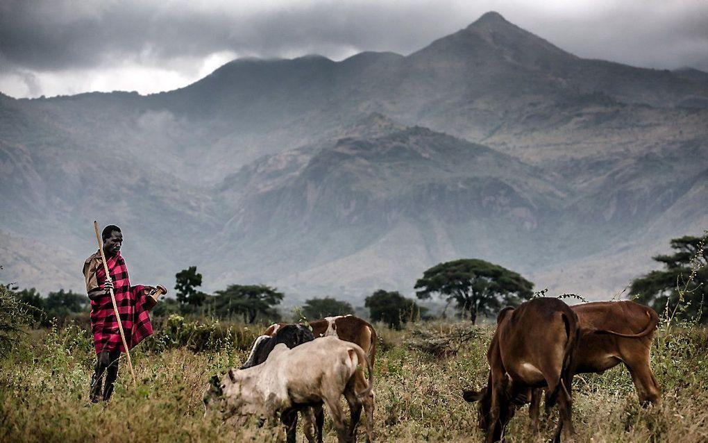 Een herder in Oeganda. beeld AFP, Luis Tato
