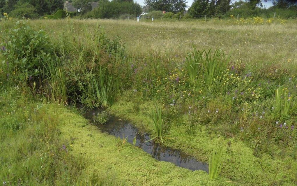 Watercrassula is een klein plantje dat zich zeer snel vegetatief voortplant. beeld Kees van Reenen