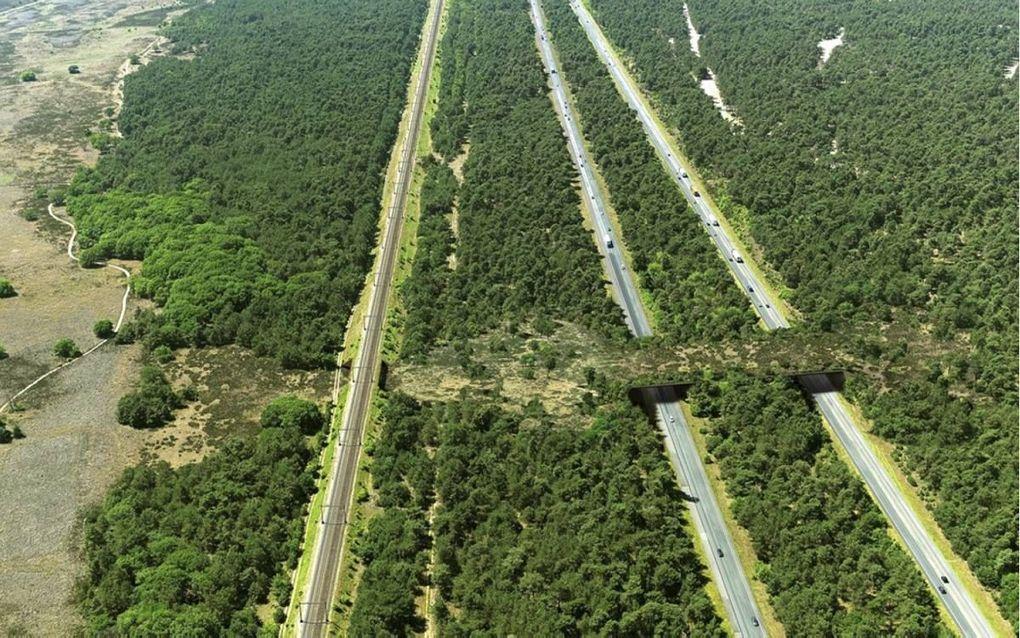 Het nieuwe ecoduct over de A1 als hij straks klaar is. beeld Provincie Gelderland