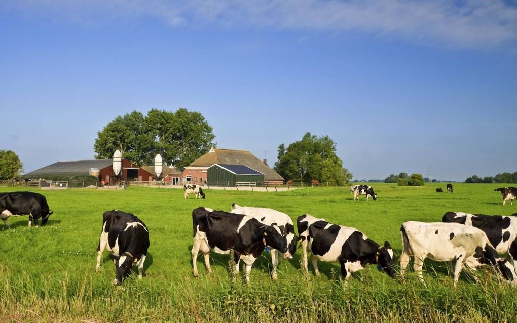 """Steeds meer boeren kiezen voor grondgebonden of biologische landbouw of spannen zich in voor agrarisch natuurbeheer op hun bedrijf."""" beeld iStock"""