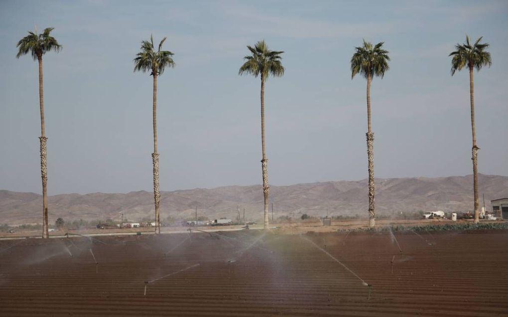 Het irrigatiewater voor de uitgestrekte land- en tuinbouwgebieden rond Yuma komt uit de Colorado.beeld Riekelt Pasterkamp
