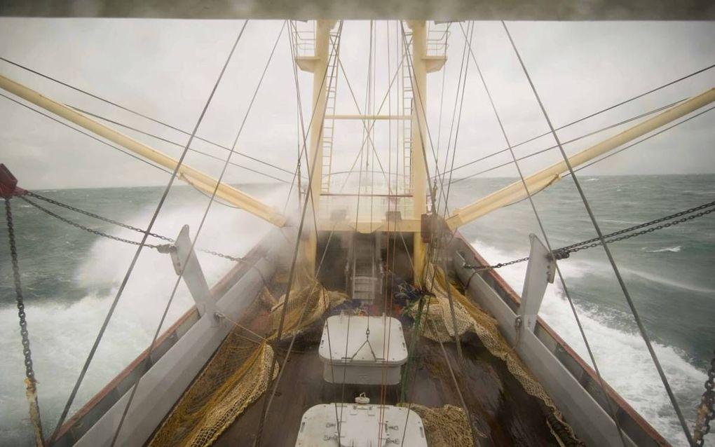 Vissers vangen binnen de grenzen van wetenschappelijk vastgestelde quota de soorten waar de markt om vraagt. beeld Cees van der Wal