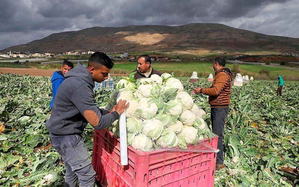 Handelsoorlog tussen Israël en Palestijnen over landbouwproducten verder verscherpt. beeld AFP