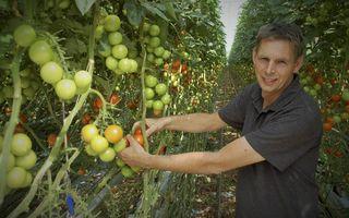 Tomatenteler Peter Duijvestijn in de kassen van Duijvestijn Tomaten  in Pijnacker. beeld Gerard ten Voorde