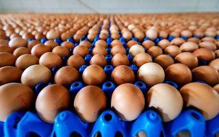 In 2017 werden miljoenen eieren vernietigd omdat er het insecticide fipronil in bleek te zitten. beeld ANP, Robin van Lonkhuijsen