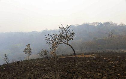 Een door brand verwoest deel van de Braziliaanse Amazone. beeld EPA, Rogerio Florentino