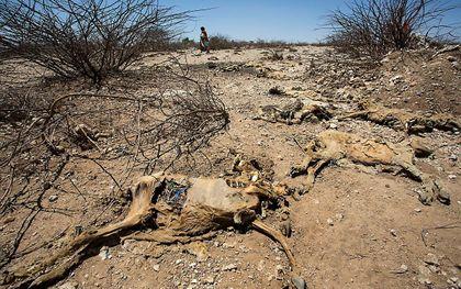 Droogte en honger in Somalië. Archiefbeeld ANP ARIE KIEVIT