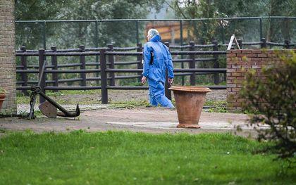 Medewerkers van de Nederlandse Voedsel- en Warenautoriteit ruimen de kippen op de besmette boerderij in Zeewolde. beeld ANP, Jeroen Jumelet