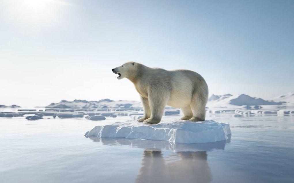 Volgens Rozendaal gaat het goed met de ijsbeer, al is daar een hoop op af te dingen.beeld iStock