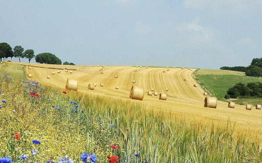 Met name door de landbouw zijn in ons land allerlei halfnatuurlijke landschappen ontstaan die aan vele soorten planten en dieren ruimte bieden.beeld Wikimedia, Luc Viatour