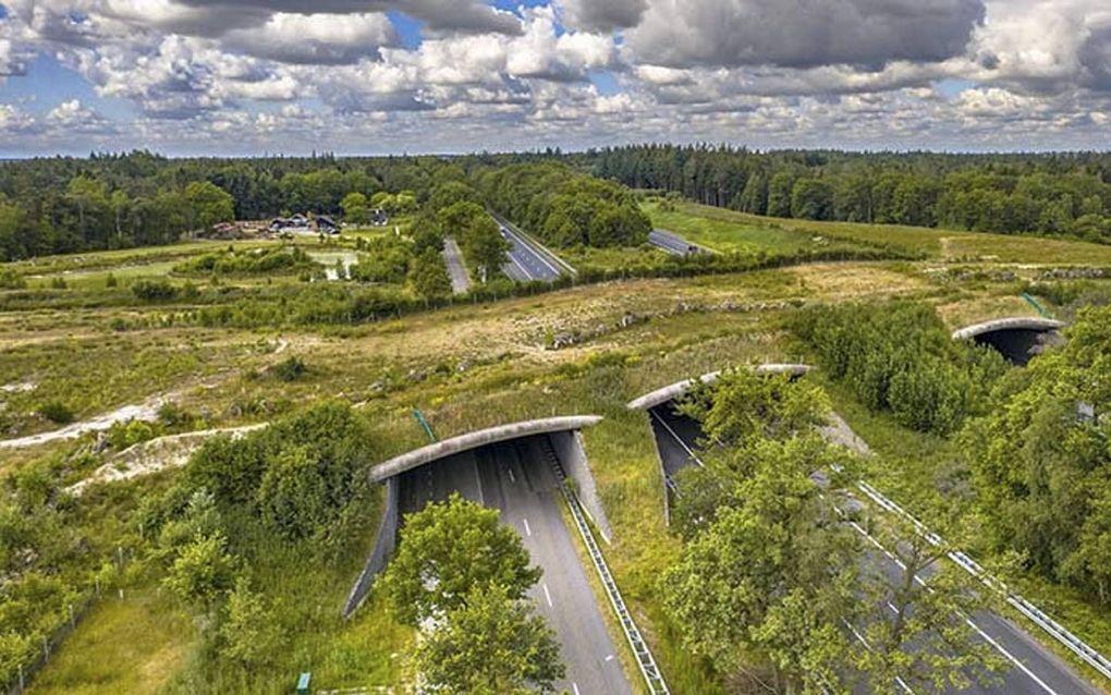 Het ecoduct Dwingelderveld bij het Drentse Beilen.beeld Sweco