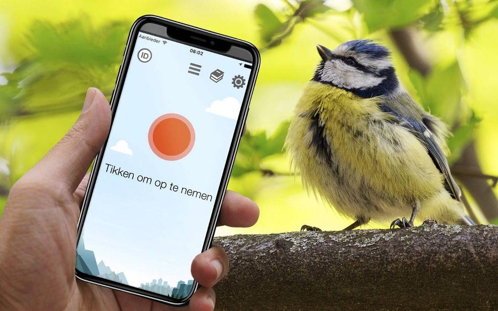 De TjilpOMatic Vogelgezang app herkent vogelgeluiden om je heen en helpt ze te identificeren. beeld RD