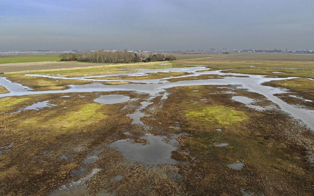 Drassig grasland, een magneet voor vogels en bijzondere planten.beeld Chiel Jacobusse