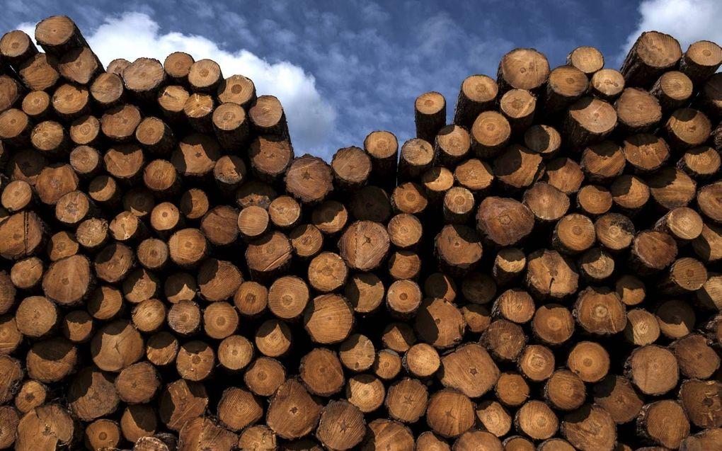 De Europese consumentenorganisatie BEUC vindt het misleidend dat houtkap en bio-energie in nieuwe regels van de Europese Commissie een groen stempel krijgen.beeld AFP, Joël Saget