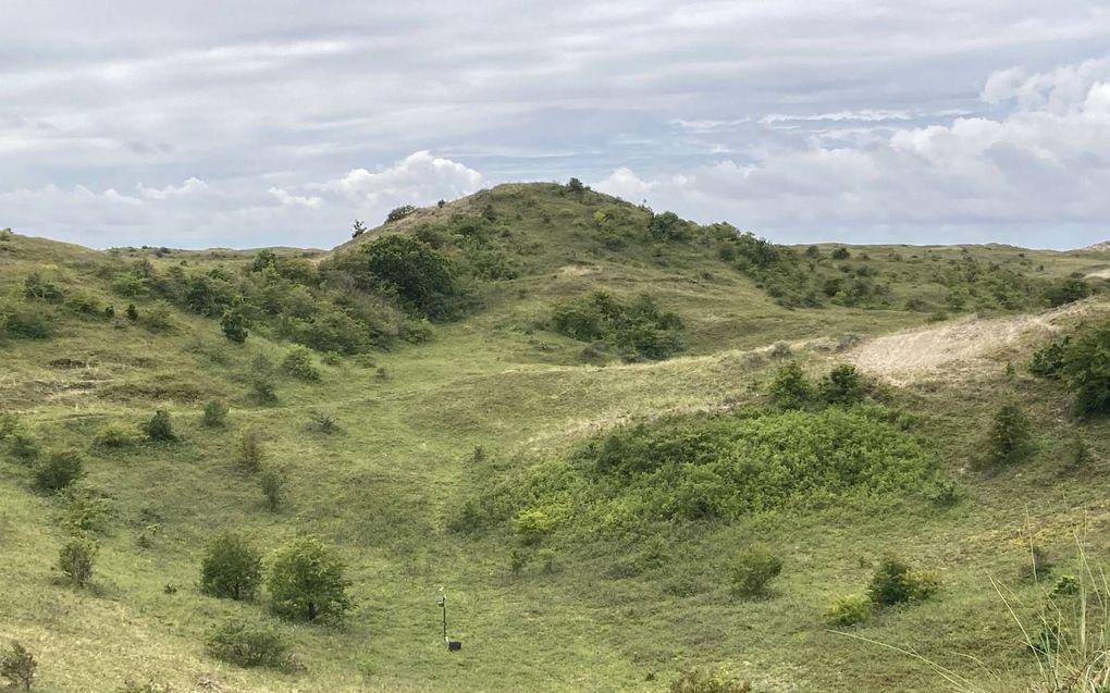 In de duinpannen in het noorden van de Schoorlse duinen in Noord-Holland trof Holvoet maar liefst zes duinpannen, waar het hartje zomer weleens zou kunnen vriezen.beeld Karel Holvoet
