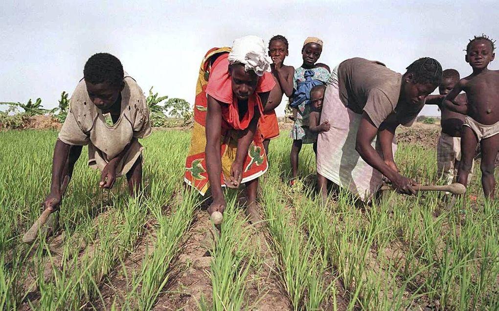 Burkinese vrouwen aan het werk op een rijstveld. beeld AFP, Jean-Philippe Ksiazek