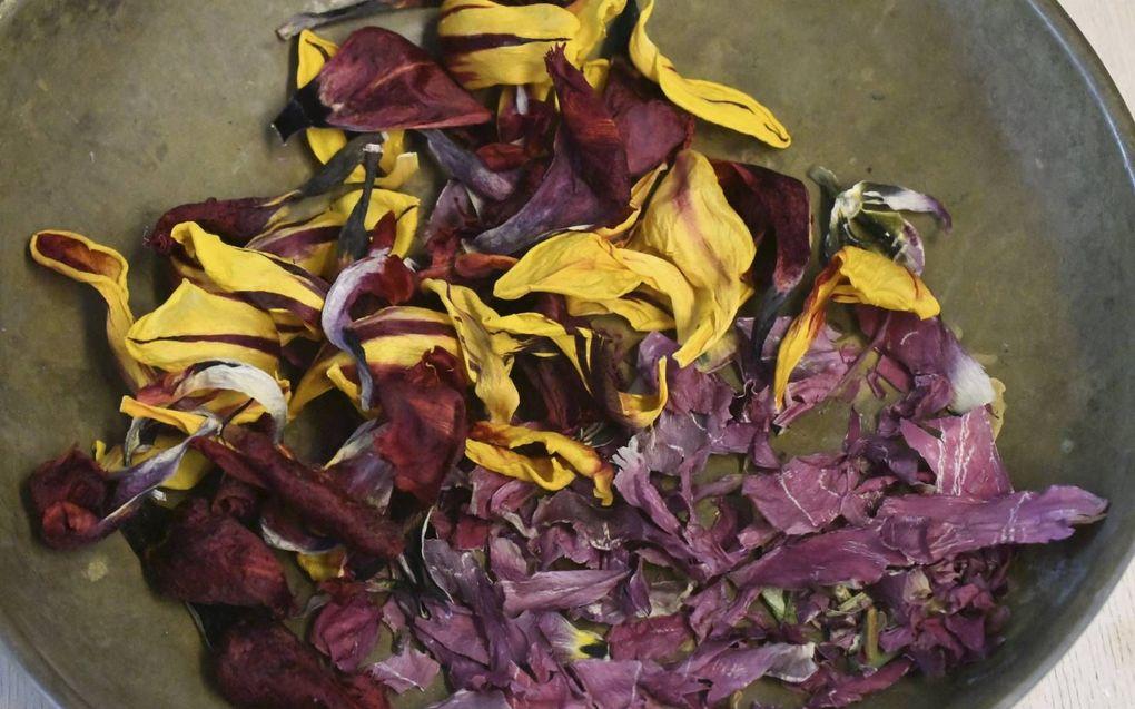 Gedroogde tulpen. beeld Theo Haerkens
