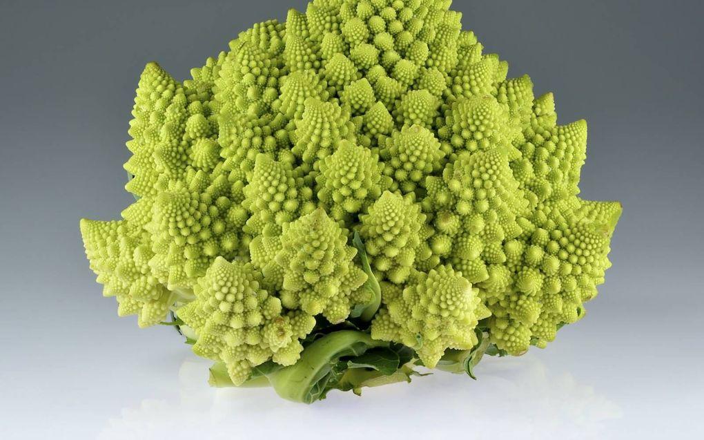 Romanesco bloemkool is een zogeheten fractal: een basisvorm die zich talloze malen op steeds kleinere schaal herhaalt.beeld Wikimedia, Ivar Leidus