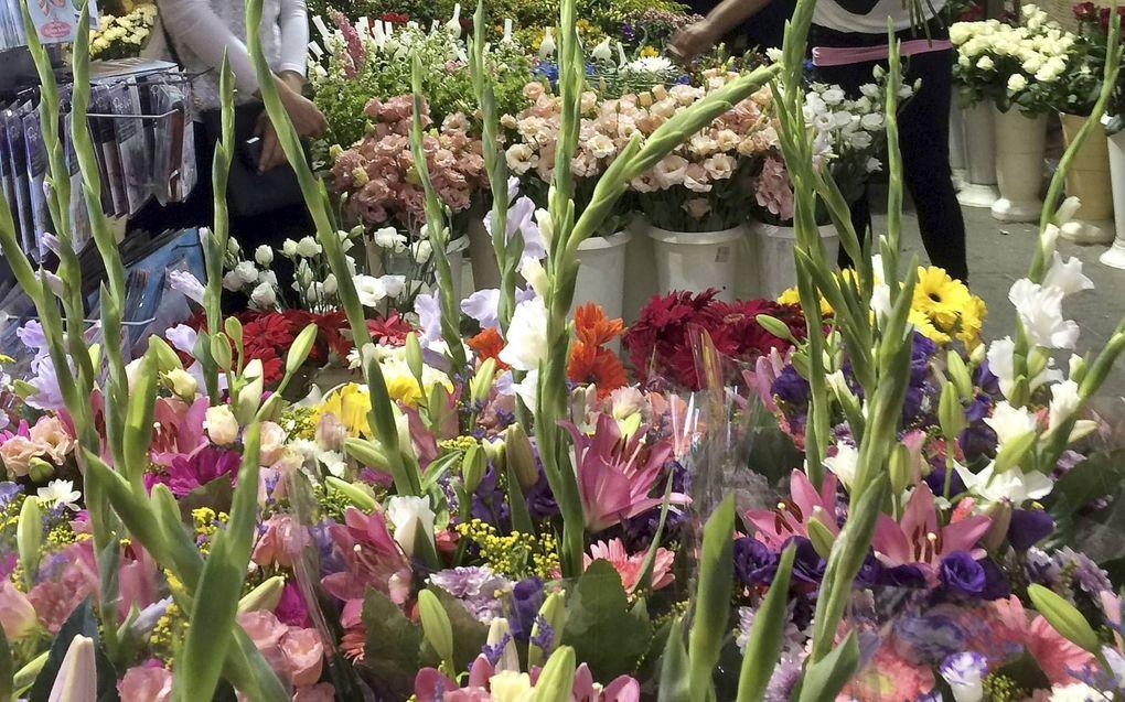 Israëliërs zoeken bloemen uit om het Wekenfeest luister bij te zetten. Sjavoeot is een van de drie Bijbelse pelgrimsfeesten.beeld Alfred Muller