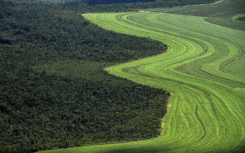 In Brazilië en Colombia vindt grootschalige houtkap plaats om ruimte te maken voor bijvoorbeeld landbouw. Foto: gecultiveerd land in Formosa do Rio Preto, Brazilië, mei 2019.beeld AFP, Nelson Almeida