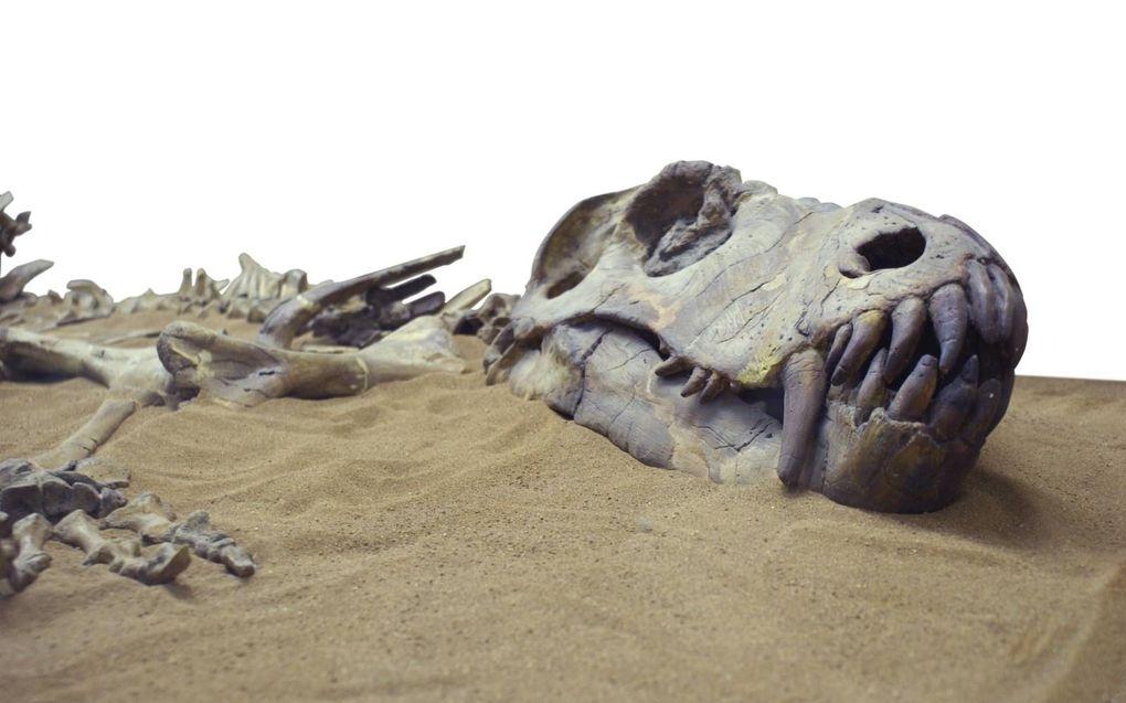Zachte weefsels in fossielen passen in de Bijbelse tijdlijn van de geschiedenis van de aarde, stelt dr. Brian Thomas.beeld iStock