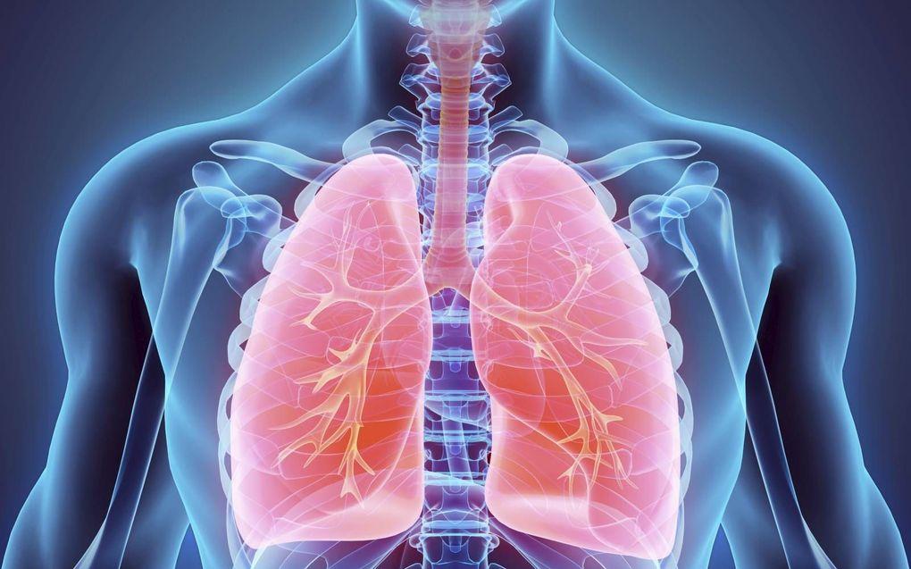 Het Virtual Human Project heeft als doel om een zo exact mogelijke digitale kopie van een patiënt te maken, op meerdere niveaus: van DNA, eiwit en cel tot weefsels en organen. Een supercomputer met enorme rekenkracht is daarvoor nodig.beeld iStock