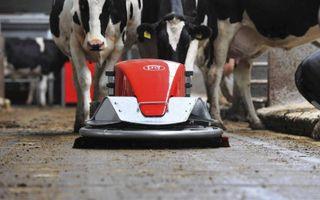 Een mestrobot van Lely schuift tussen de koeien. Lely is een van de fabrikanten die de uitstoot van stikstof uit stallen met nieuwe technieken probeert te verminderen. beeld Lely