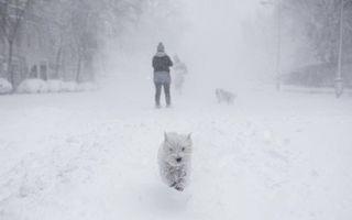 Honden hebbben de tijd van hun leven in Madrid. De Spaanse hoofdstad kampt met de hevigste sneeuwval in vijftig jaar. Storm Filomena brengt bar winterweer en bijbehorende ijzige temperaturen in grote delen van het mediterrane land. beeld AFP, Benjamin Cremel