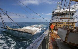 Nederlandse pulsvissers aan het werk op de Noordzee. Sinds de EU vorig jaar tot een gefaseerd ingevoerd verbod op elektrisch vissen besloot, is de pulsvloot fors gekrompen. beeld ANP, Niels Wenstedt
