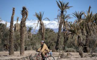 Oases in Marokko, belangrijk tegen de verwoestijning, lijden onder hoge temperaturen.beeld AFP, Fadel Senna