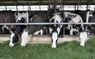 Niet alleen de stikstofuitstoot van bijvoorbeeld een veehouderij maar ook de afstand tot een natuurgebied bepaalt de depositie. beeld RD, Anton Dommerholt