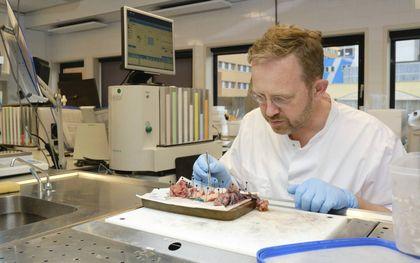 Patholoog dr. Jos Bart van het UMCG. beeld Sjaak Verboom