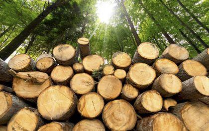 Plantaardige vezels worden nog nauwelijks toegepast als grondstof in de chemische industrie. Meestal worden ze biomassa-afval verbrand in biocentrales. Promovendus George Hermens maakt er een biologische grondstof van voor verf. beeld iStock