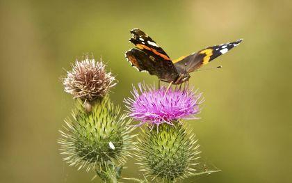 """""""Even nietsdoen en de zon op je gezicht voelen of genieten van een vlinder in je tuin.""""beeld RD, Henk Visscher"""