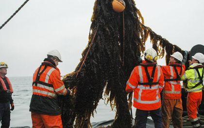 Het zeewier wordt geoogst.  beeld North Sea Farmers